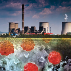 Environmental Toxins and Cancer Risk